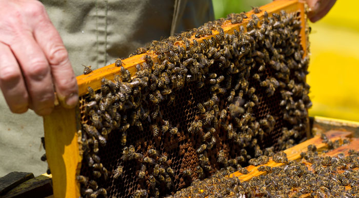Bee Hive (Shutterstock, maggee)