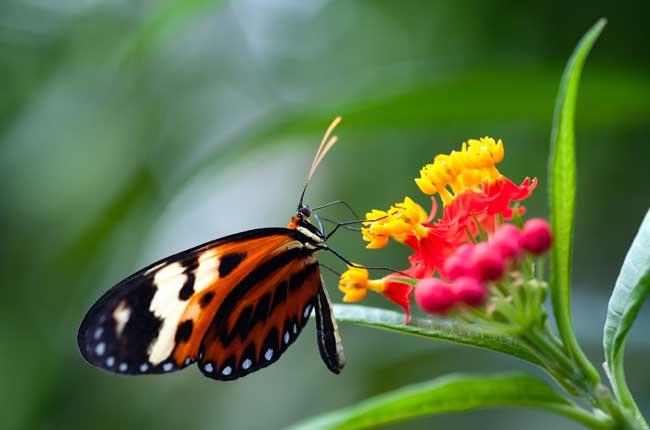 Butterfly-Tile_72210589