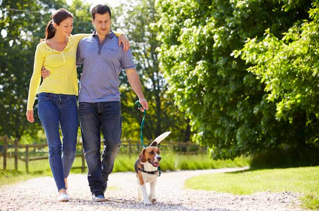 couple-walking-dog