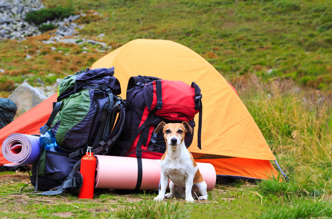 Doggy-Camping-Essentials_31