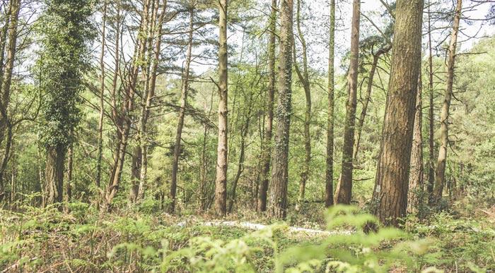 Roundhill-Campsite