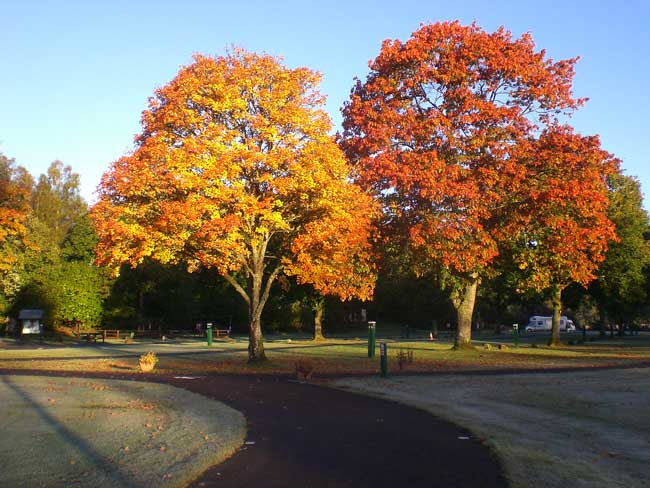 The-Campsite-Trees-in-Autum