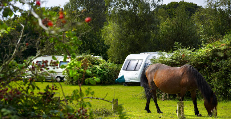 Pony-on-our-Ocknell-Campsite