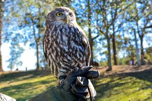 Owl-(Shutterstock,opailin)