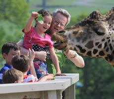 Child feeding a Giraffe at Longleat Safari park