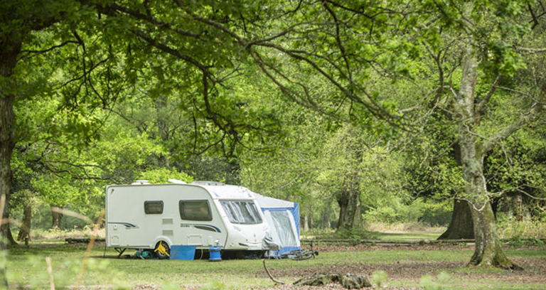 Hollands Wood 07