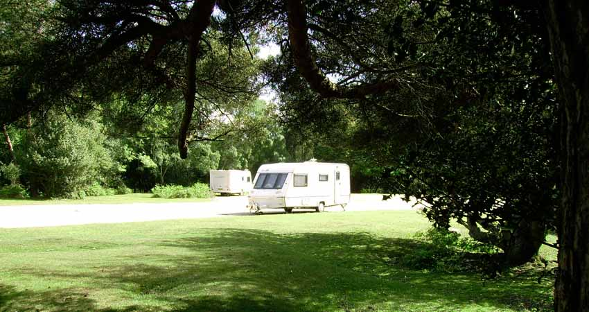 Ocknell Campsite in the New Forest