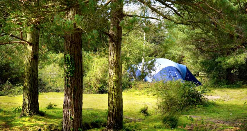 Tent amongst the trees at Roundhill campsite