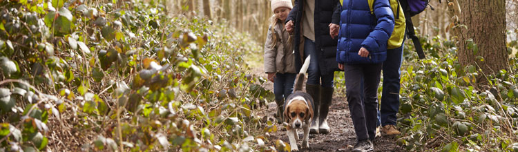 family-walking-with-dog-through-wood (Shutterstock, Monkey Business Images)