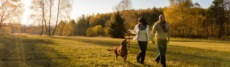 holmsley-campsite-dog-walk (Shutterstock, CandyBox Images)