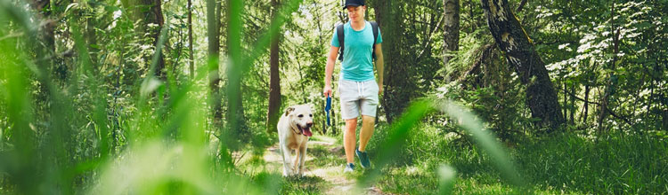 man-in-blue-top-walking-dog-through-forest (Shutterstock, Jaromir Chalabala)