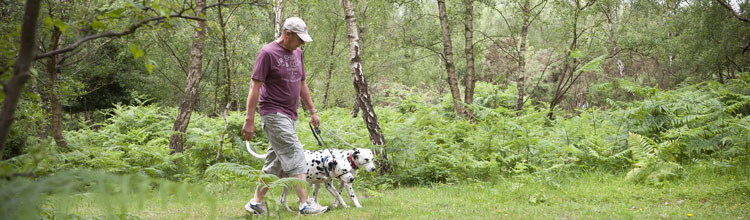 man-walking-dog-through-matley-wood-campsite