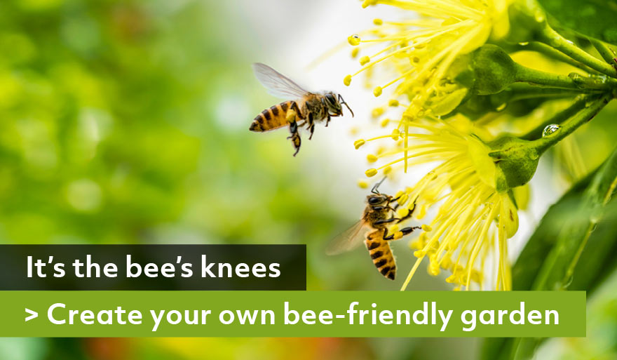 bee-friendly-garden
